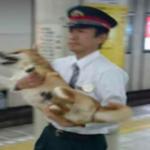 柴犬が無賃乗車?!駅員に取り押さえられる決定的瞬間の画像!