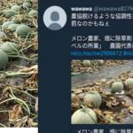 農協から脱退後、メロンに除草剤が撒かれた→犯人がSNSで批判?