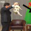 【動画】ロシアのプーチン大統領ブチ切れww犬の扱いが虐待だろっ!