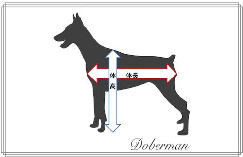 犬,体高,体長